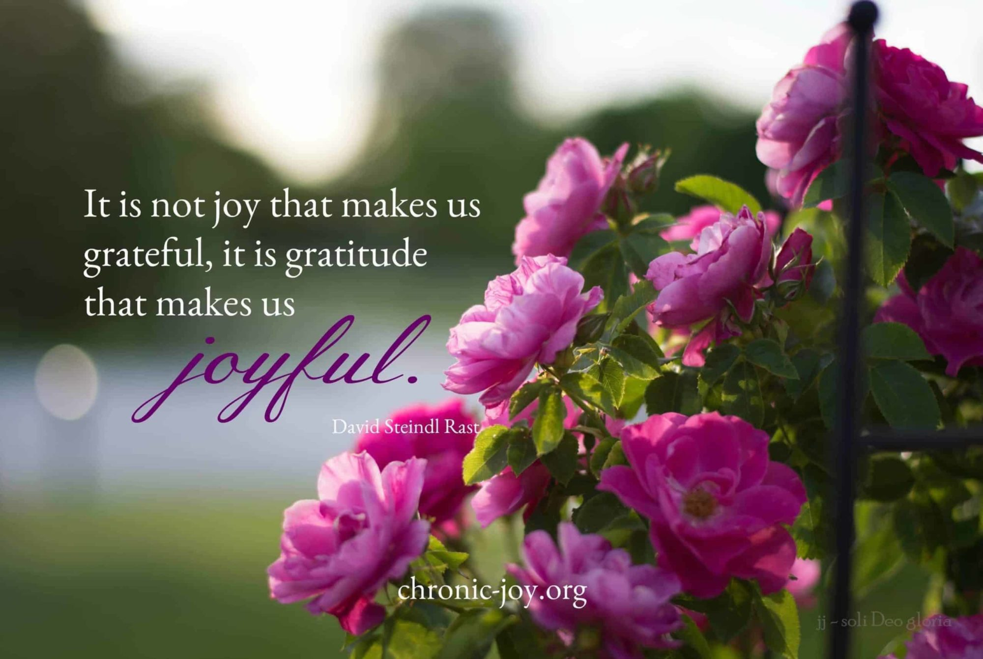 """It is not joy that makes us grateful, it is gratitude that makes us joyful."" David Steindl Rast"