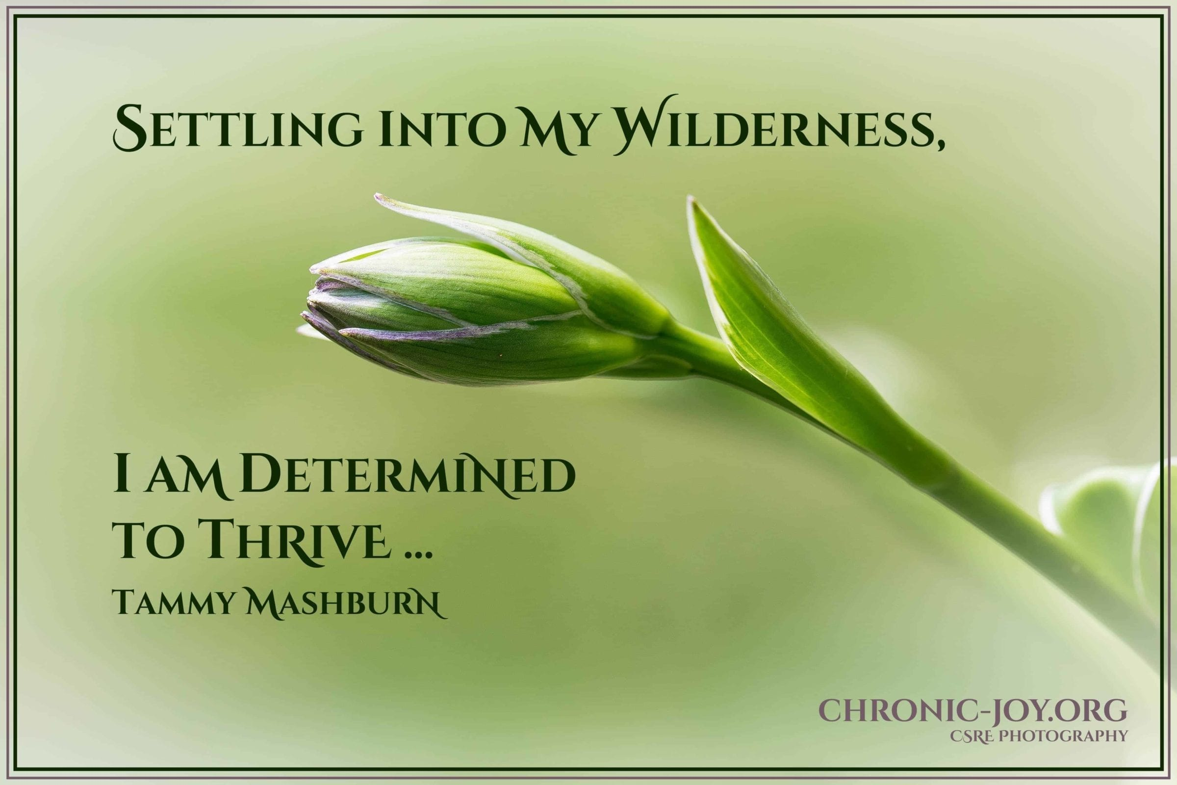Determined to Thrive in the Wilderness Place